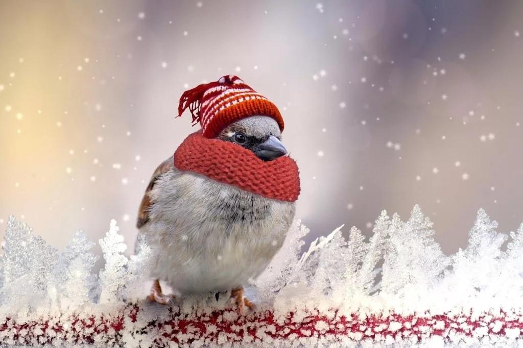 Одевайтесь теплее, не мерзнете! Доброго утра!