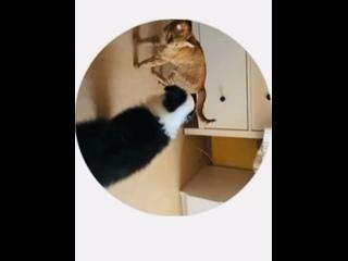 Видео от Ярославы Калининой
