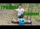 Поиск белых грибов в окрестностях Смолькино 2