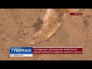 «Кладбище» домашних животных обнаружили в подвале жилого дома
