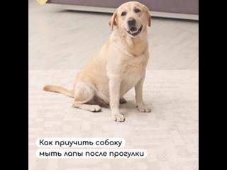 Как приучить собаку купаться после прогулки