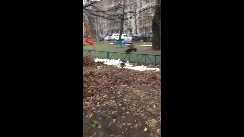 Видео от Ирины Тищенко