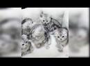 Смешные видео про котят