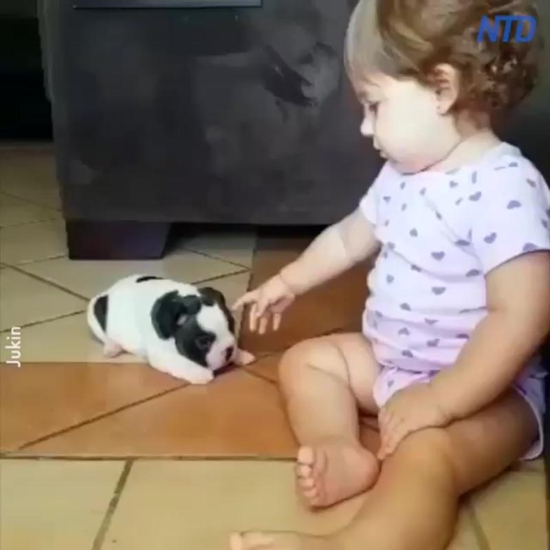девочка целует щенка французского бульдога