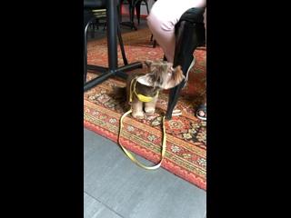 Cannibal Coffee kullanıcısından video
