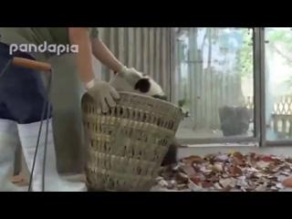 Не трогай мою корзину-у-у-у ))))) Уборщица (дворник) борется с пандами! РЖАК!))))