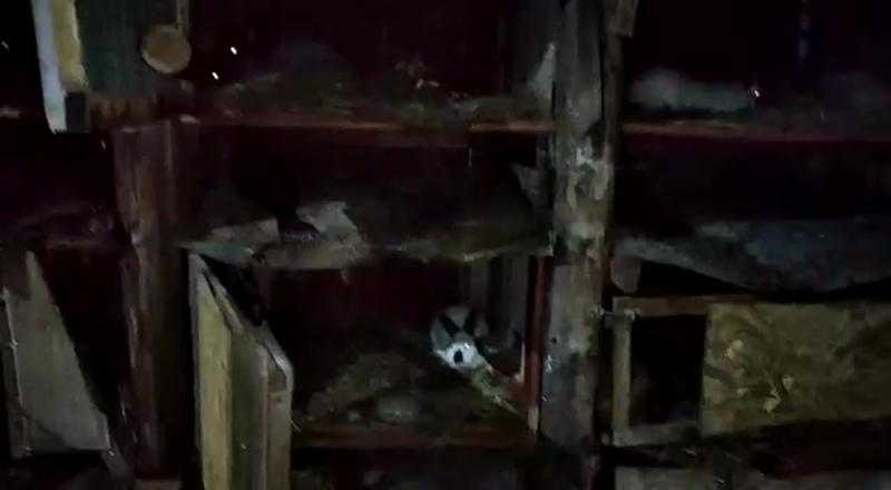 Видео от Натальи Лебедевой
