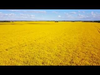 ЛЕТАЙ | Цвет настроения - желтый!С отменой вас этого вот всего! @ kovalakinen                              Источник: https:/
