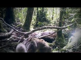 Мраморная кошка - красавица из юго-восточной Азии с карими глазами!