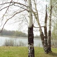 РОДОВАЯ ПАМЯТЬ. Выездной интенсив 6-8.06
