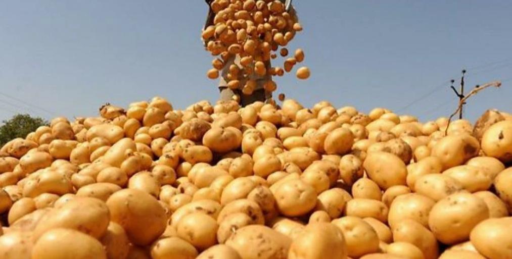 Соланин. Картошка наносит ответный удар