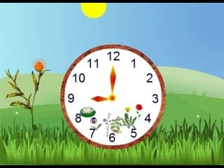 Цветочные часы. Познавательная лекция для детей