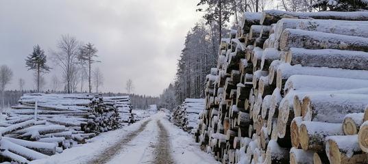 Жители Пудожского района Карелии требуют остановить варварскую рубку леса