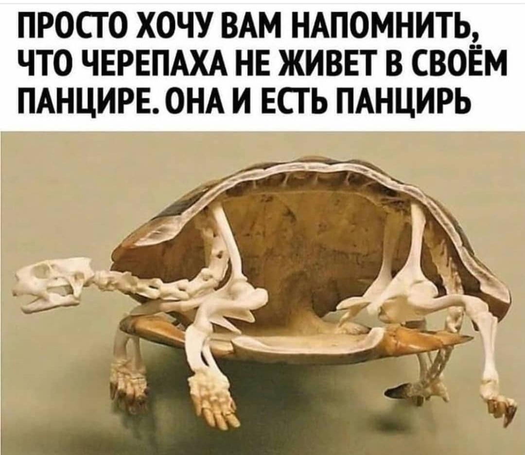 Дочь просит сухопутную черепашку