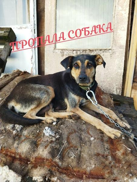 Комаричский район,Деревня Заречная. Пропала собака...