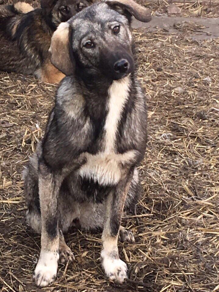 Какой нужно быть собакой что бы стать