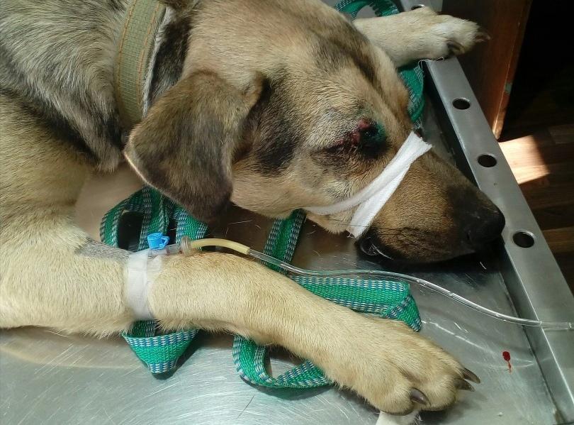 Их выгоняют, мучают, режут: ярославские волонтеры рассказали о спасении бездомных животных