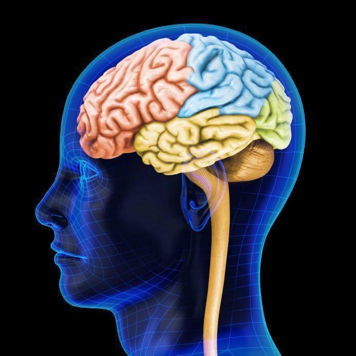 Мозг не резиновый: чтобы запомнить что-нибудь, надо забыть что-нибудь другое