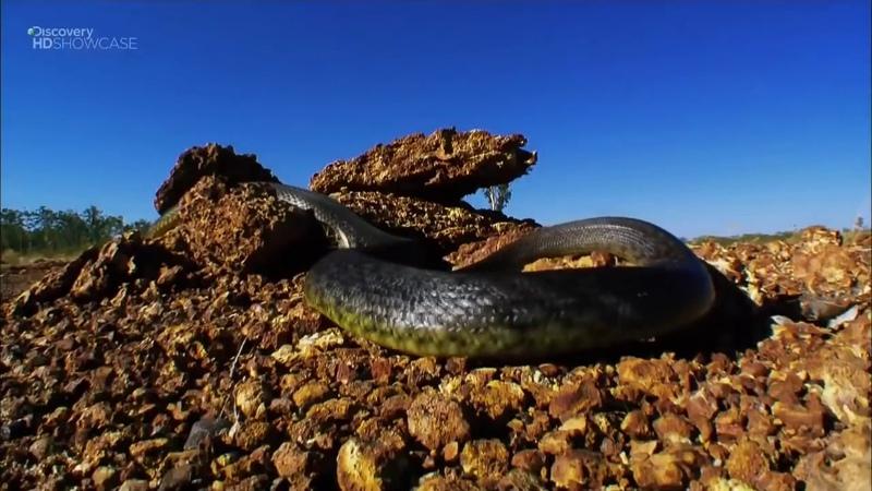 Хищники убийцы Австралии Дикие животные Документальный фильм Discovery
