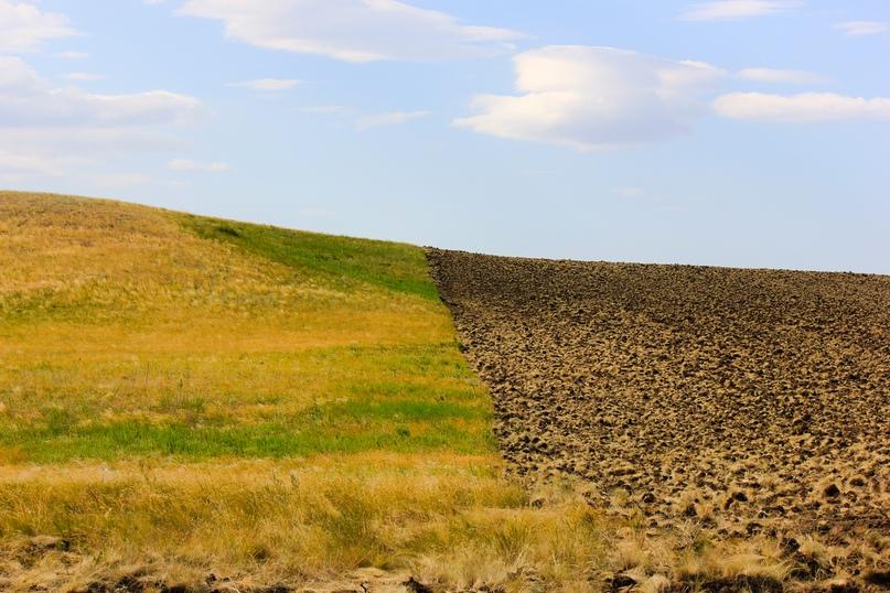 Экспедиционная оценка эффективности землепользования в Оренбуржье, изображение №3
