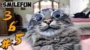 СМЕШНЫЕ КОШКИ И КОТЫ 2020 Приколы С Кошками и Котами 2020 Funny Cats