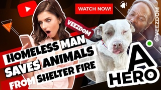 16 animals are saved by a homeless man as animal shelter burns