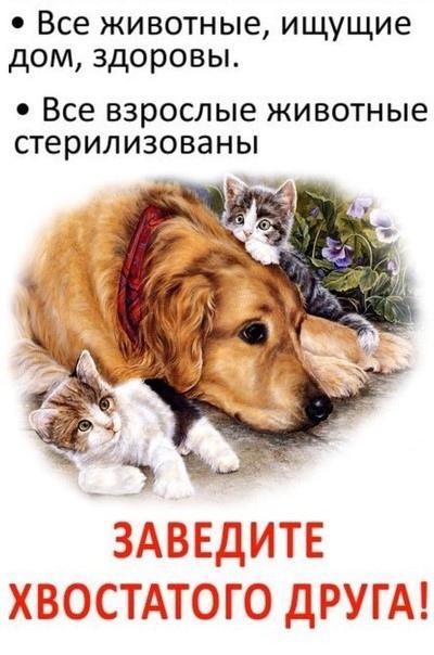 Картинки для групп помощи животным