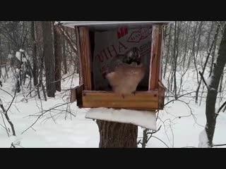 Застал неизвестную птицу в лесу! Кто эта птица)