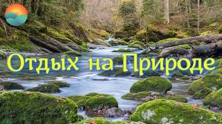 Волшебное Пение Лесных Птиц, Журчание Лесного Ручья / Видео Для Релакса, Медитации, Сна / Ultra HD
