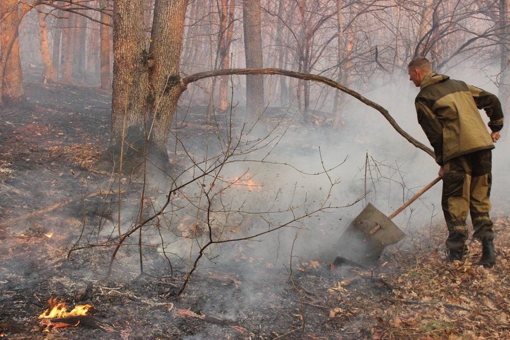В КЧР вспыхнул лесной пожар под Архызом