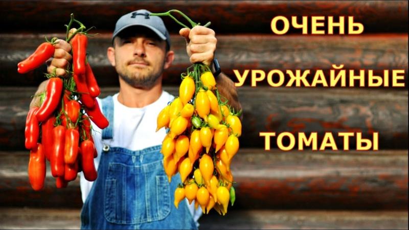 Самые УРОЖАЙНЫЕ сорта ТОМАТОВ в этом году Томаты Золотая канарейка Казанова