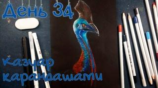 Казуар цветными карандашами. Ни дня без кисти #34
