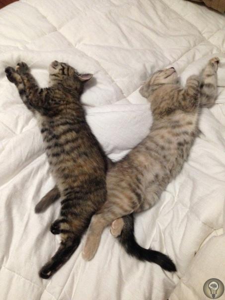 КАК ОБЩАТЬСЯ С КОШКАМИ ОТВЕТ НАУКИ Коты и кошки часто неохотно идут на контакт с людьми. Может даже показаться, что им нравится только просыпаться, есть, портить портить мебель, снова спать и