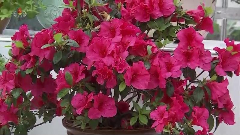 선물식물들에 비낀 위인칭송의 세계 중앙식물원 국제친선식물관을 찾아서 날개잎고사리